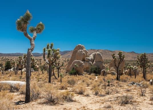 Lembah Yucca, California, Amerika Syarikat