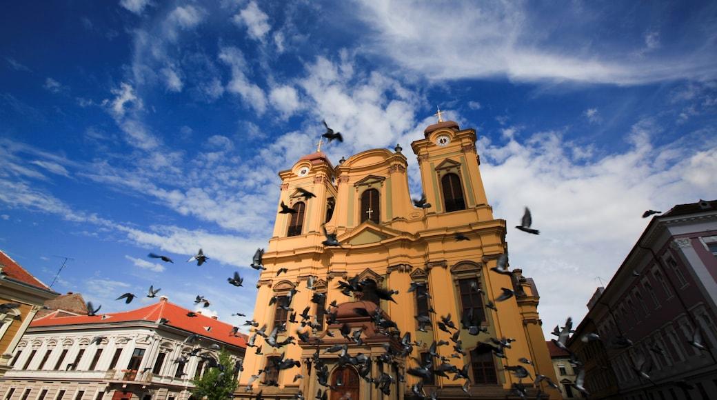 Centre-ville de Cluj-Napoca