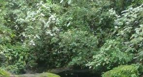 Puerto Vjecho de Talamanka