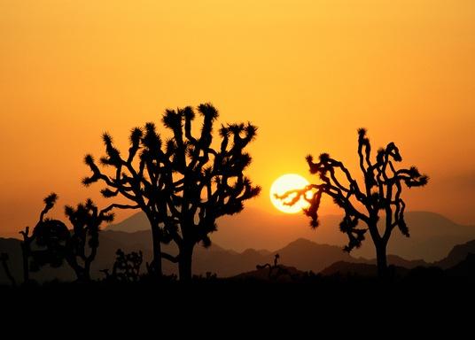 Joshua Tree, California, United States of America