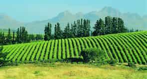Stellenbosch Central