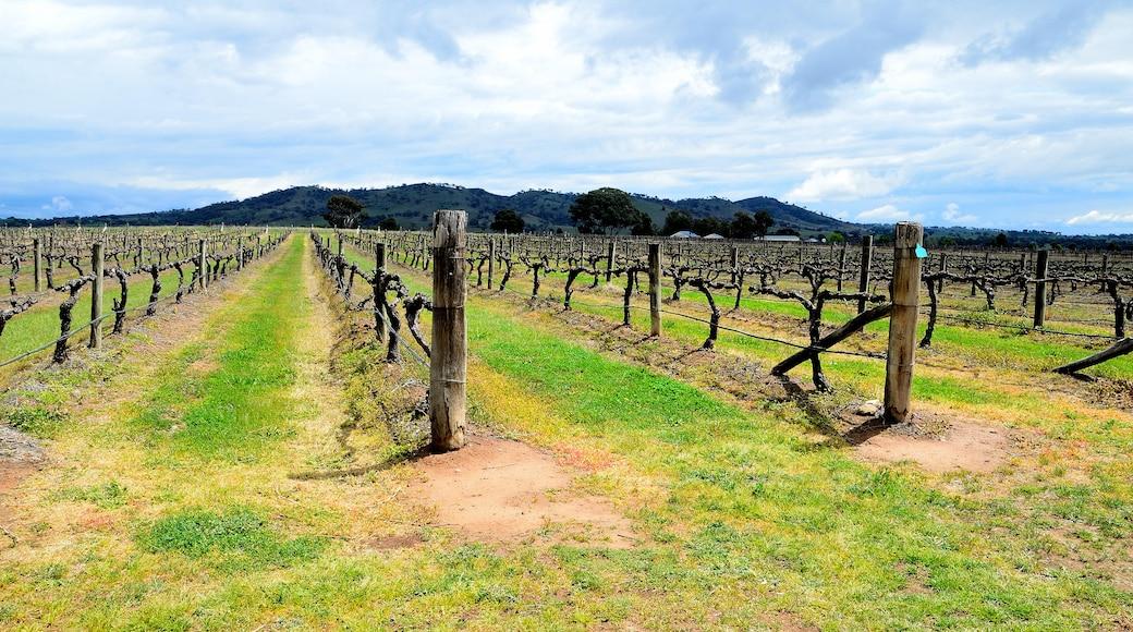 Mudgee Wine Region