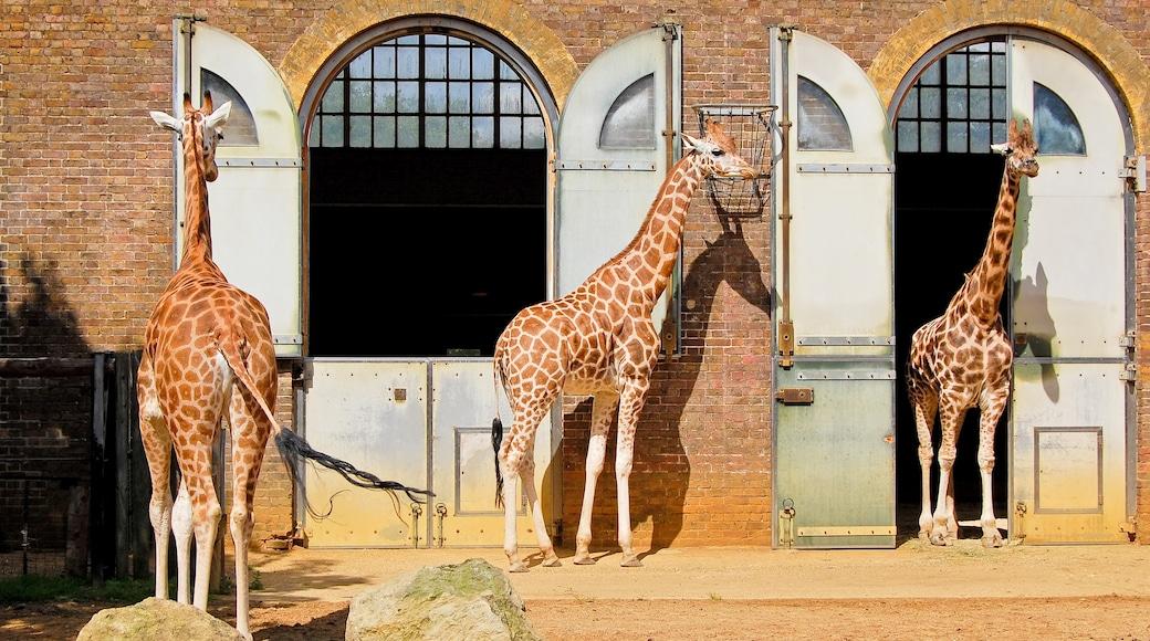 สวนสัตว์ ZSL ลอนดอน