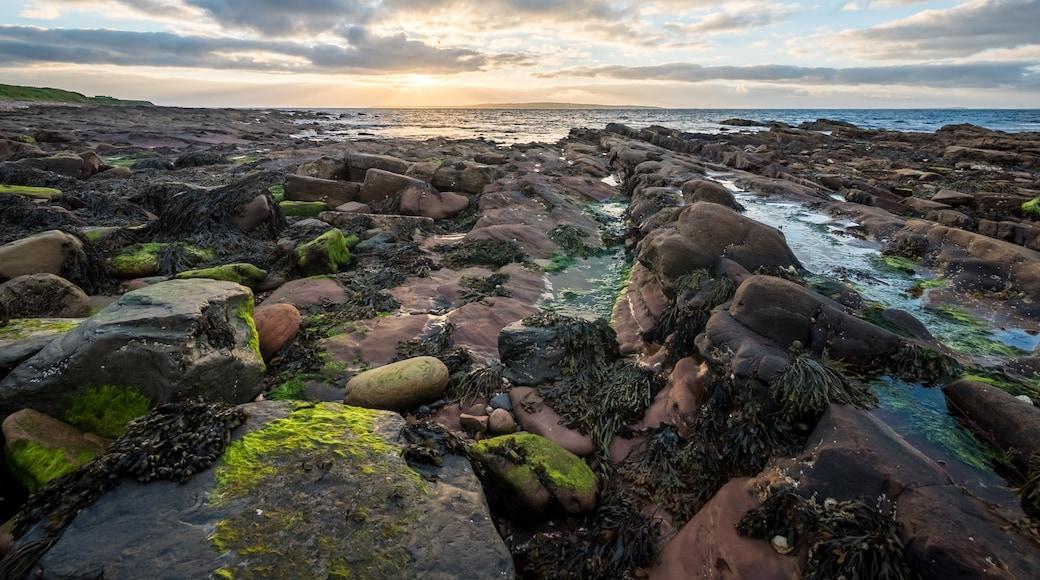 Shetlandsöarna