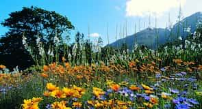科斯坦伯斯國家植物園