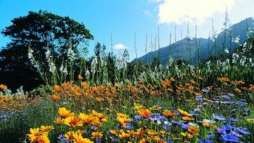 Kirstenboschi