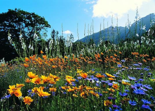 Newlands, Afrique du Sud