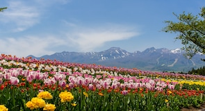 Κέντρο Λουλουδιών Nasu Flower World