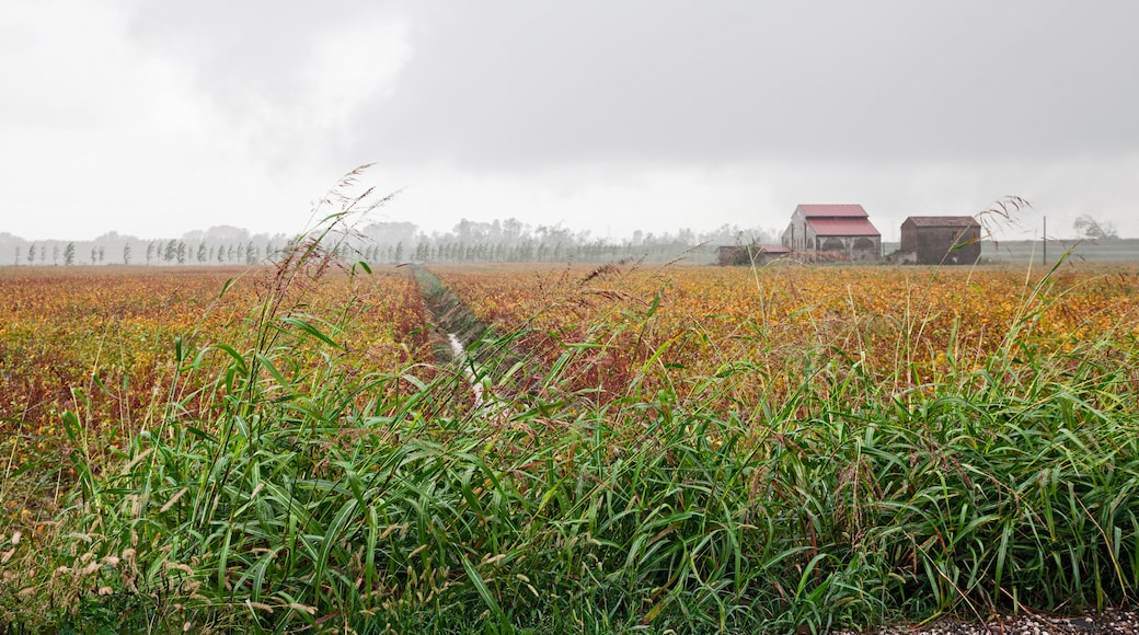 Parco regionale veneto del Delta del Po