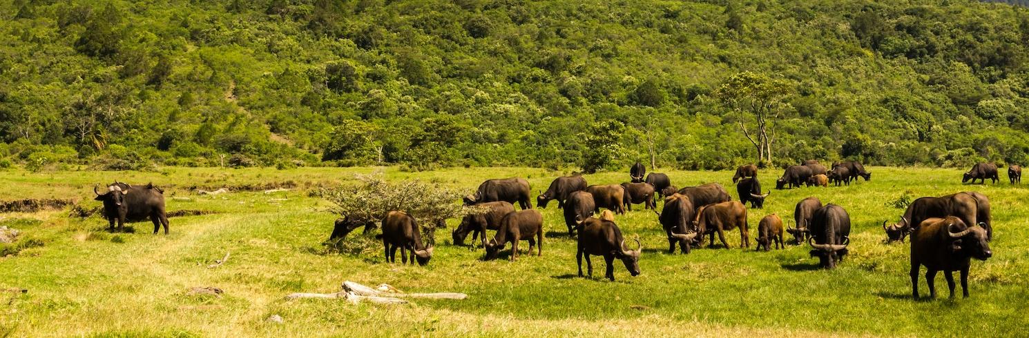 Αρούσα, Τανζανία