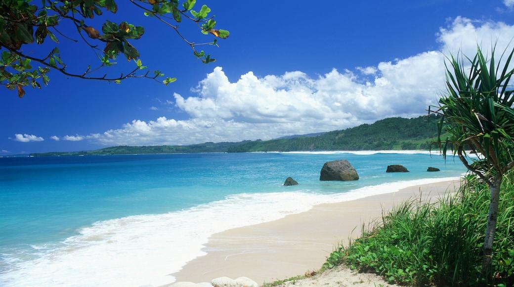 Province des Petites îles de la Sonde orientales