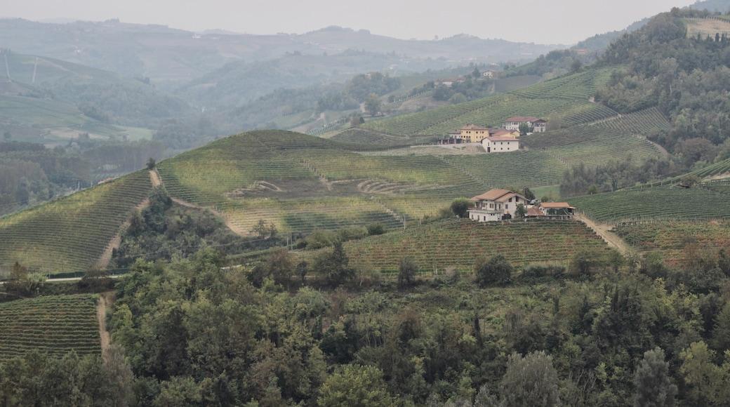 Langhe Region