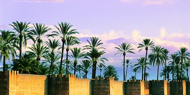 Barrio Palmeraie, Marrakech, Región de Marrakech-Safí, Marruecos