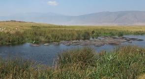 恩戈羅恩戈羅自然保育區