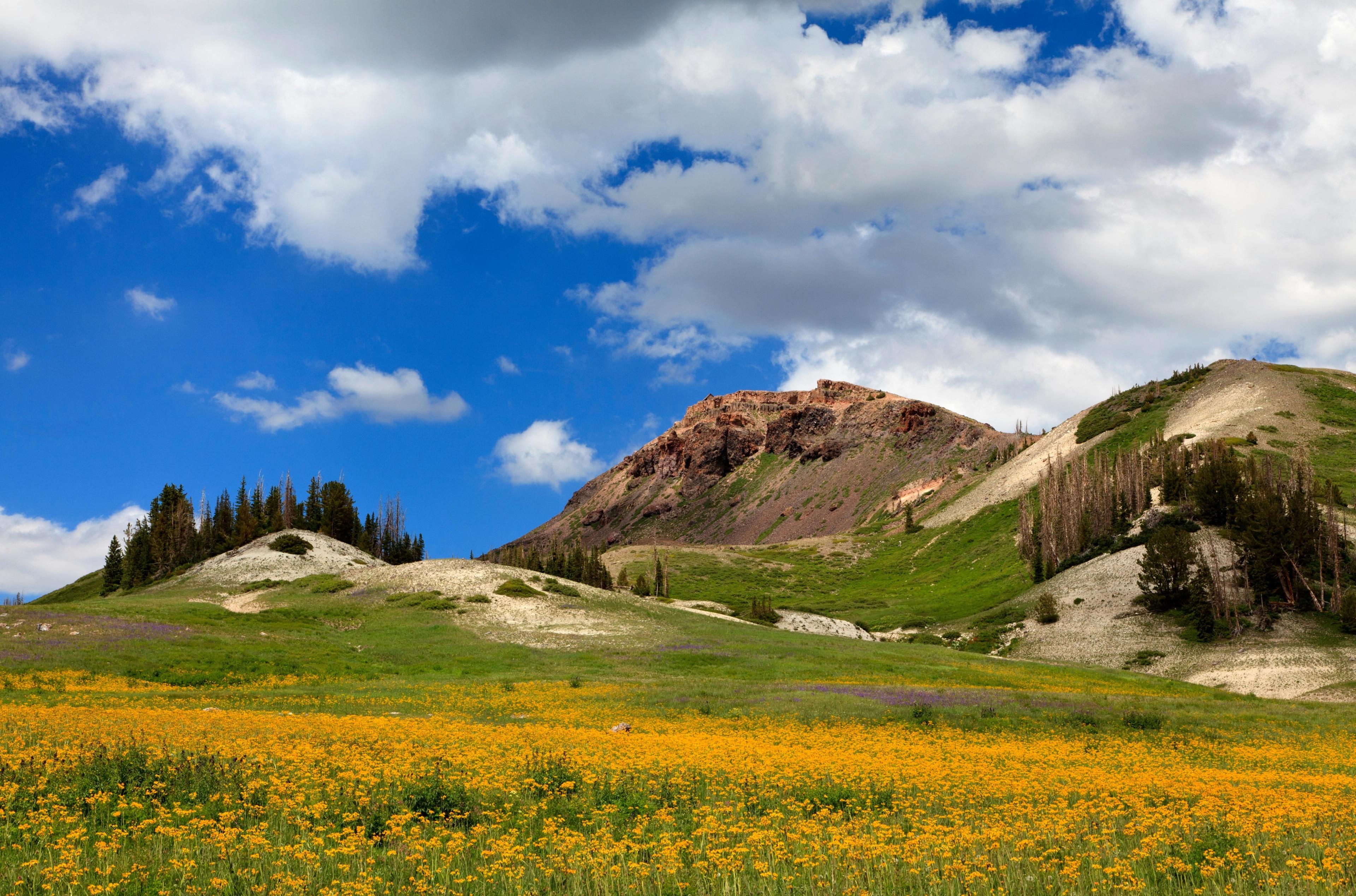 Steam Engine Meadows, Brian Head, Utah, United States of America