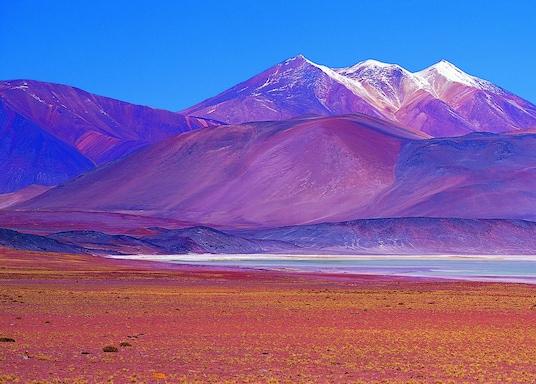 Vicuna, Čile