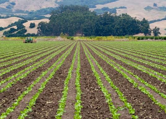 Santa Cruz (and vicinity), California, United States of America