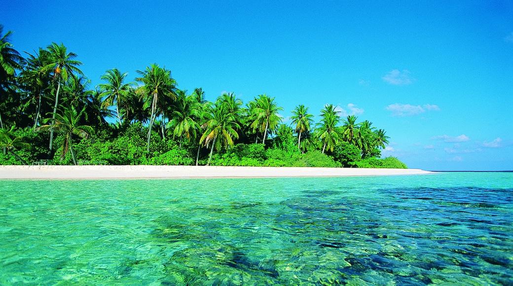 Strand von Maafushivaru