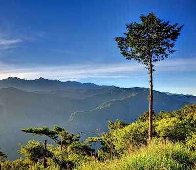 Alishan National Forest Recreation Area