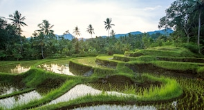 Jatiluwih-rijstplantage