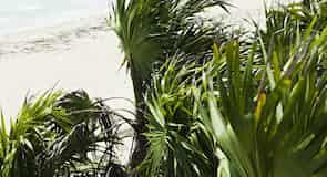 パラダイス ビーチ
