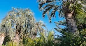 Tropická záhrada s aligátormi Atagawa