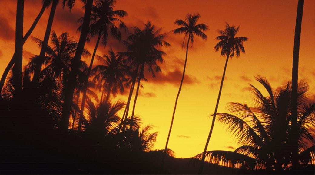 Insel Silhouette