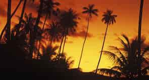 Silhouette Island (eyja)
