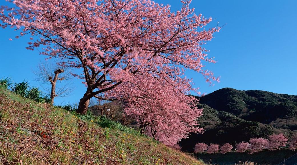 Minamiizu