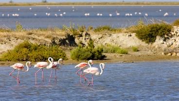 Flamingo-stranden/