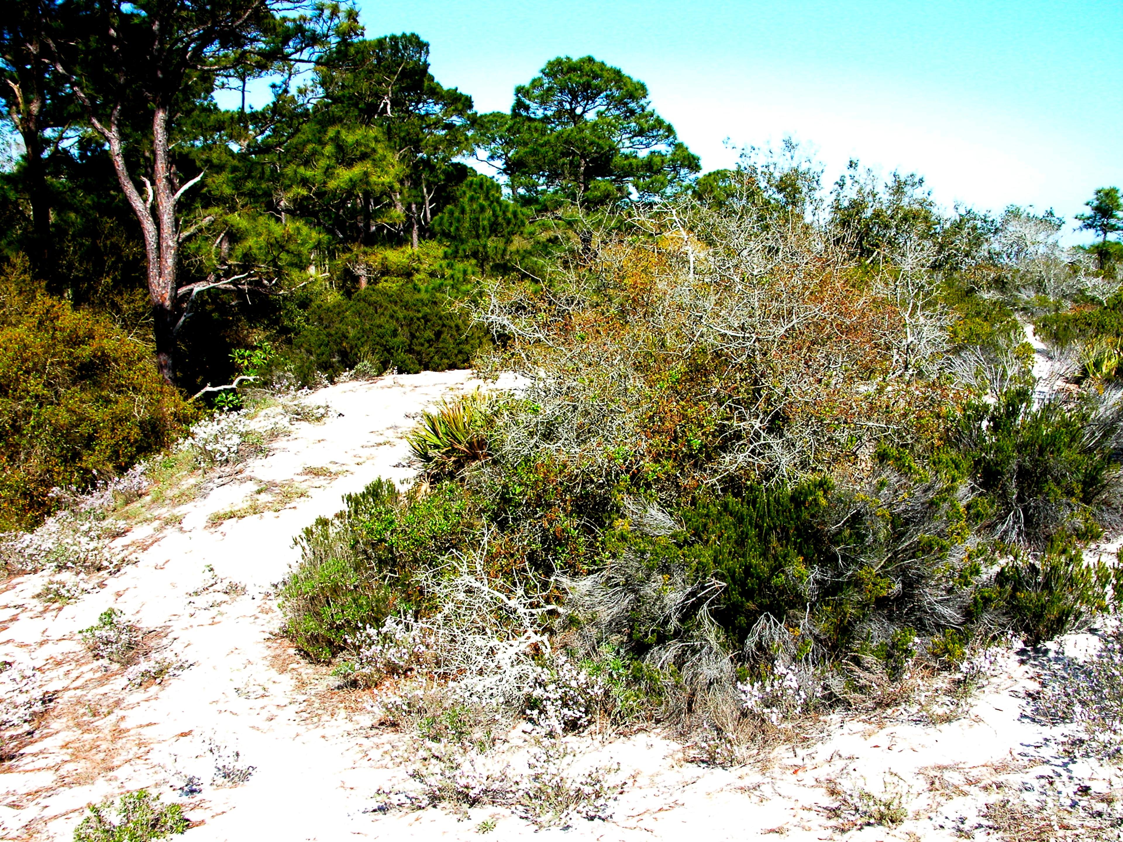 Alabama Coastal Birding Trail, Gulf Shores, Alabama, United States of America