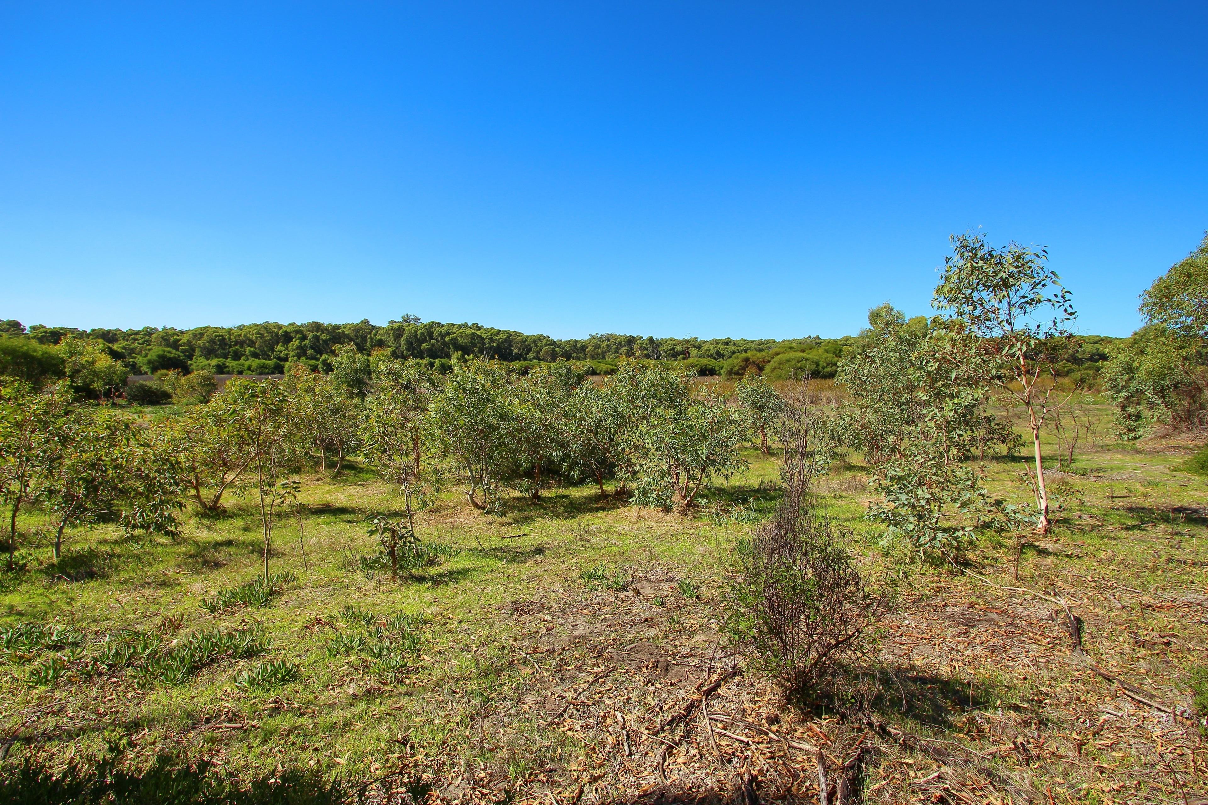 Yanchep National Park, Yanchep, Western Australia, Australien