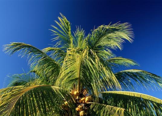 Twentynine Palms, Kalifornien, USA
