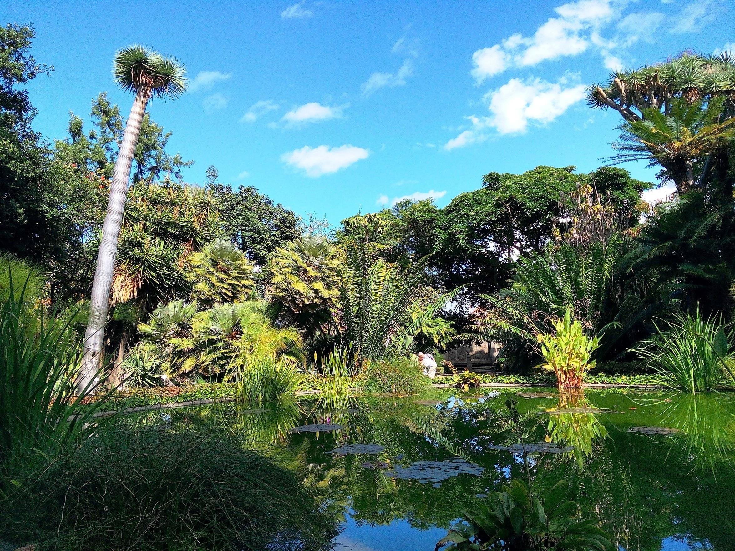 Déjate sorprender por la belleza natural de Botanical Gardens, una de las zonas verdes más hermosas de Puerto de la Cruz. Además de ser un destino donde reina la tranquilidad, aquí también podrás recorrer la bonita costa o relajarte en el spa.
