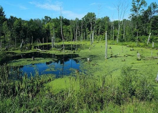 Detroit Lakes, Minnesota, Verenigde Staten