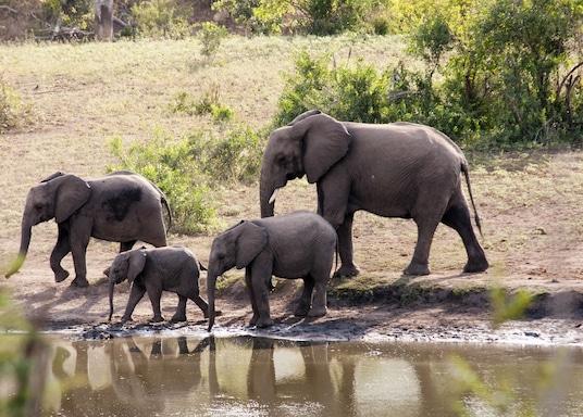 Marloth Park, Νότια Αφρική