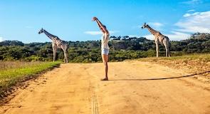 非洲普馬巴私人野生動物保留區