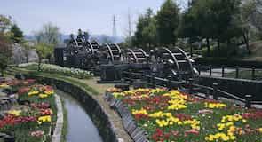 Tonami Lale Parkı