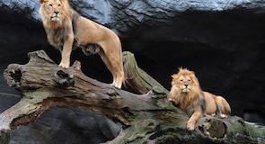 Hagenbeck Zoo