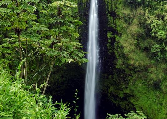 哈卡洛, 夏威夷, 美國