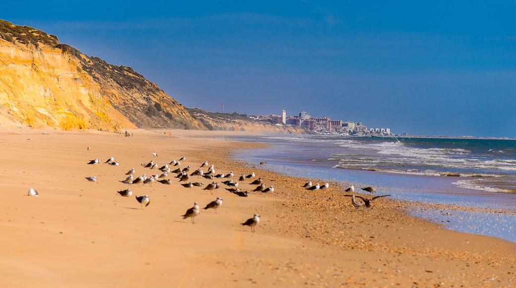 Costa de la Luz - Huelva