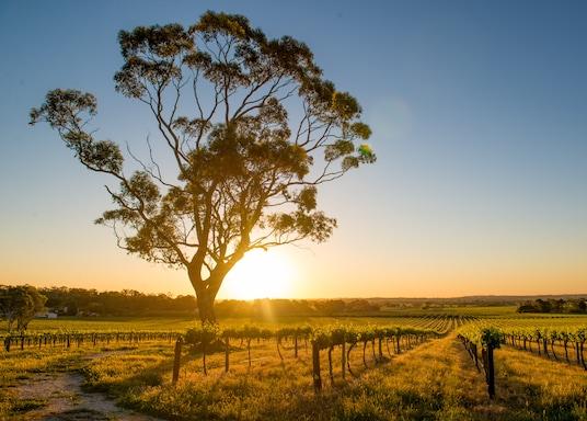 Басейн Мюррей-Дарлінг, Австралія