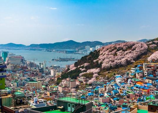 ซาฮา, เกาหลีใต้