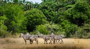 Akagera Ulusal Parkı
