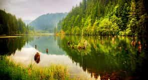 Lacu Rosu