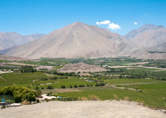 Vicuna, Chile