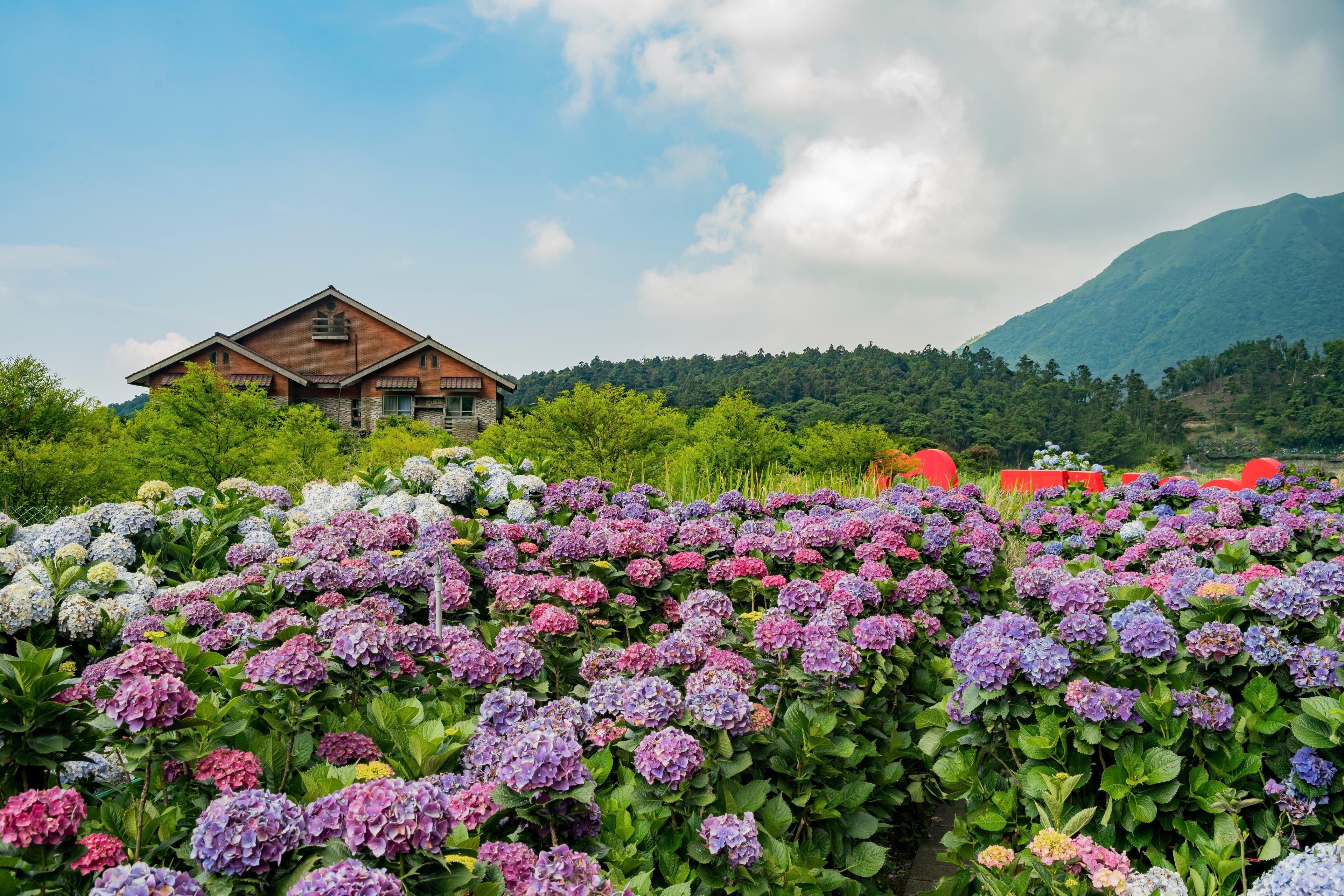 Arrondissement Miaoli, Taiwan