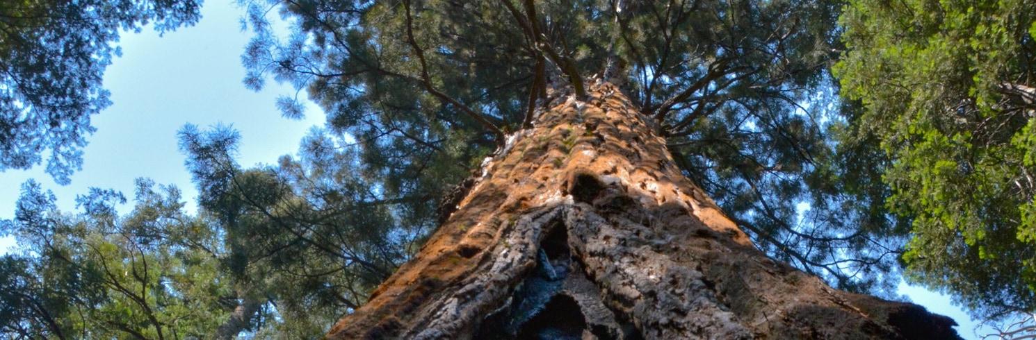 Big Trees, Kalifornia, Stany Zjednoczone