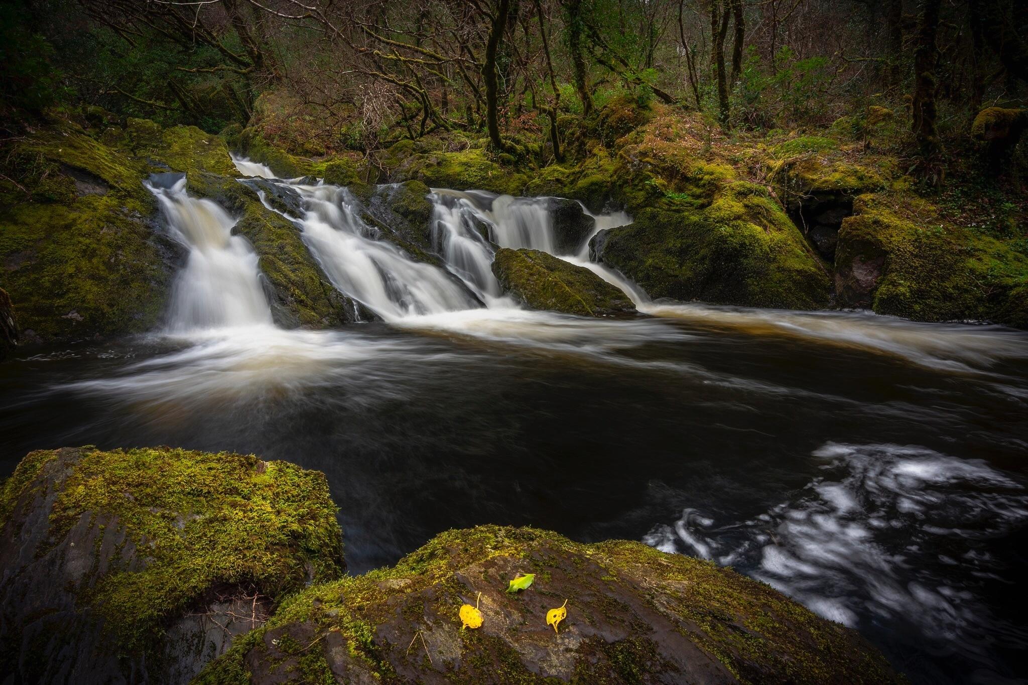 Glengarriff Woods Nature Reserve, Glengarriff, County Cork, Ireland