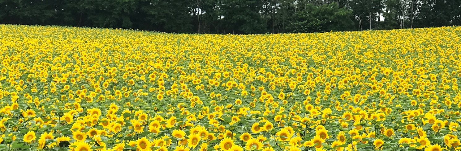 Hokuryū, Japan